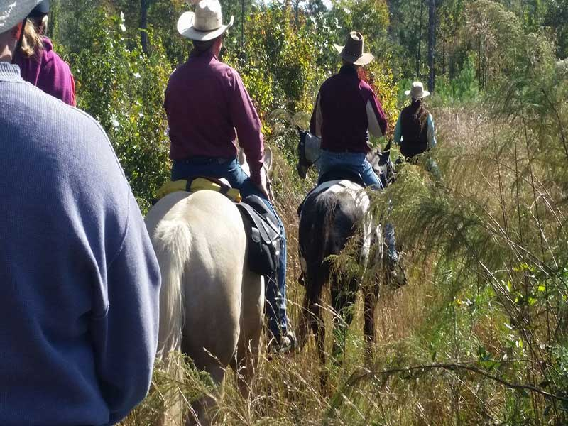 croatan-trail-horseback-riding-adventures-new-bern-image