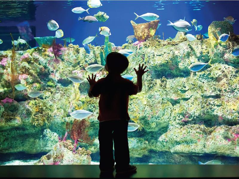 north-carolina-aquarium-nc-image