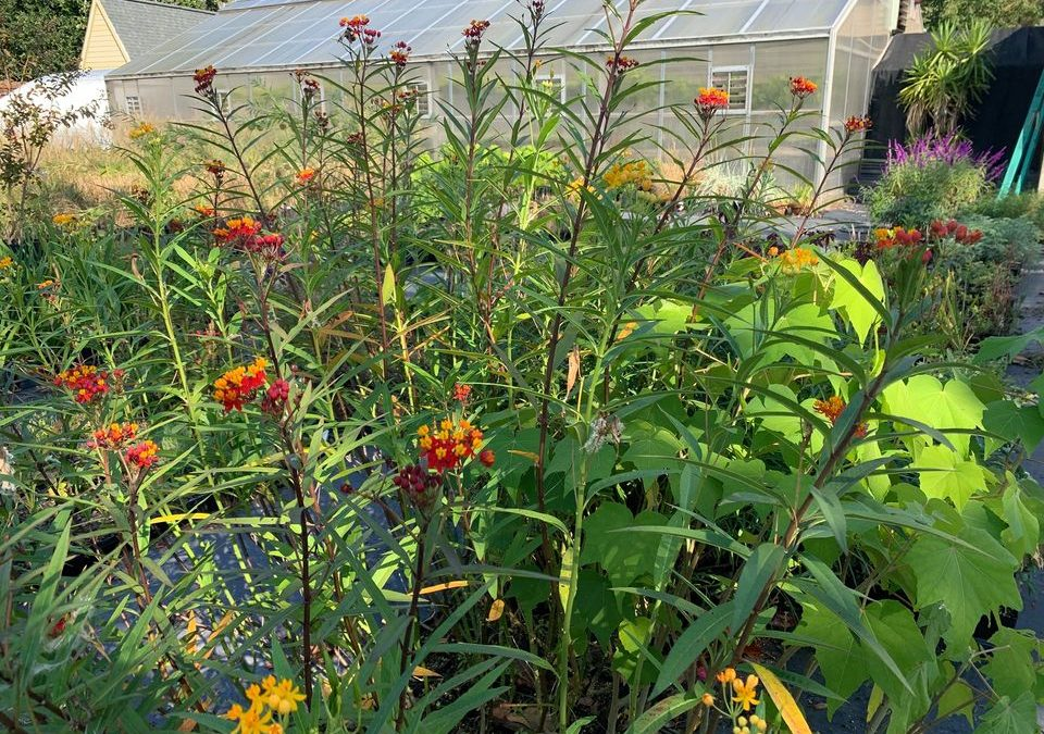 """Garden Lecture Series- September """"Heritage Plants of ENC & Plant Sale Preview """""""